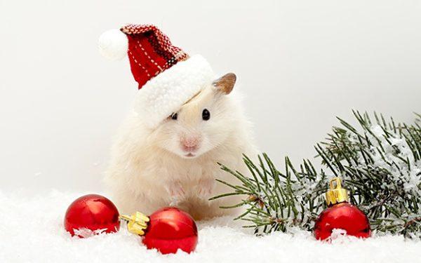 Стильные прикольные картинки с новогодними крысами и мышами