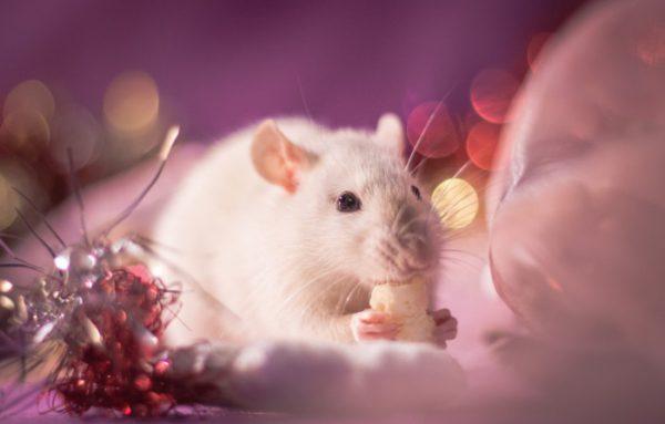 Бесплатные нарисованные картинки с мышами на Новый год Новогодние рисованные картинки с крысами и мышами Новогодние нарисованные картинки с мышками и крысами Необычные рисунки с новогодними крысами и мышами Интересные рисованные картинки на год Крысы Прикольные рисунки с крысами Красивые нарисованные картинки с мышами Современные рисунки с мышками Новогодние рисованные картинки год Крысы Оригинальные изображения с новогодними мышками и крысами Новогодние нарисованные картинки на год Крысы Стильные прикольные нарисованные картинки с новогодними крысами и мышками Красивые рисунки с крысой Бесплатные фото-обои на рабочий стол с мышами на Новый год Новогодние обои на рабочий стол год Крысы - Мыши Новогодние обои на рабочий стол с мышками или крысами Красивые заставки на рабочий стол с новогодними крысами и мышами Интересные обои на рабочий стол в год Крысы, Мыши Прикольные заставки на рабочий стол с крысами или мышами Красивые заставки на рабочий стол с мышами или крысами Современные новогодние обои для рабочего стола с мышками или крысами Новогодние обои для рабочего стола год Крысы, Мыши Оригинальные обои на телефон с новогодними мышами и крысами Новогодние обои на телефон в год Крысы, Мыши Стильные заставки на телефон с новогодними крысами и мышами Красивые заставки на телефон с крысой или мышкой Анимационные открытки с годом Крысы - короткое поздравление Красивые мультяшные анимационные открытки с годом Крысы Современные картинки гифки с крысами и мышами Бесплатные и интересные гиф-картинки с новогодними мышками и крысами Мерцающие открытки с новогодними крысками и мышками Оригинальные новогодние открытки-анимация с красивыми крысами и мышами Новогодние анимационные картинки с красивыми крысами и мышами Интересные открытки с наступающим Новым годом Крысы Поздравительные картинки с наступающим Новым годом Крысы Красивые открытки с наступающим Новым годом Крысы или Мыши Поздравительные картинки с наступающим Новым годом Крысы или Мыши Лучшие открытки с наступающим Нов