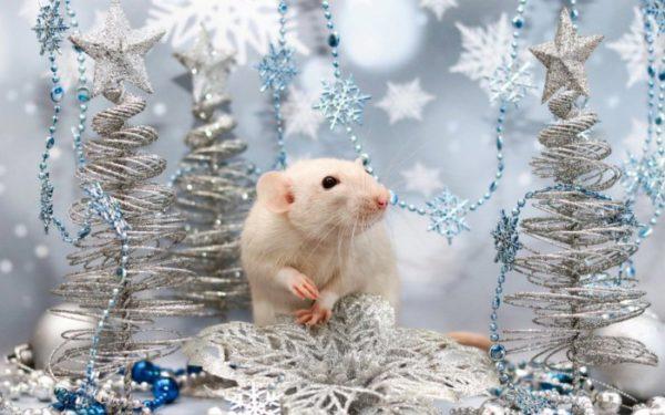 Новогодние картинки в год Крысы
