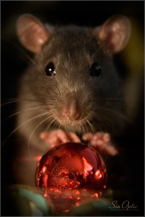 Красивые заставки на телефон с крысой или мышкой